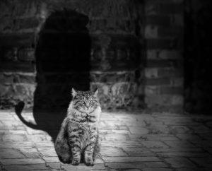 cat-564202